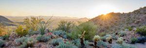 scotsville-desert